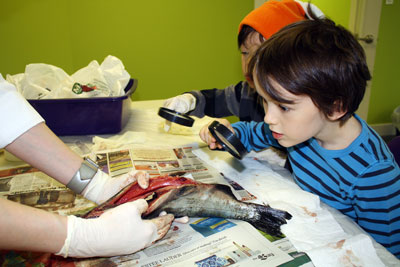 Salmon dissection workshop