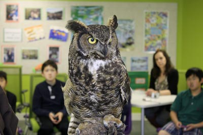 Students meet owls at Pear Tree Education 15