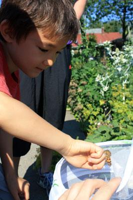 Butterfly release field trip